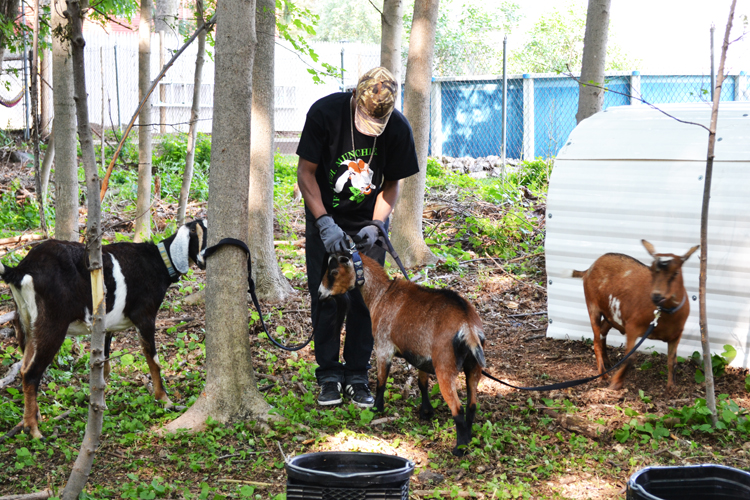 Jhon with goats